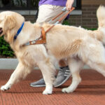 Featured Charity: Leader Dogs
