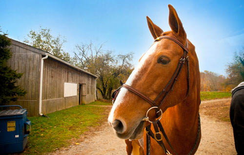 Featured Charity:  Pegasus Therapeutic Riding Academy